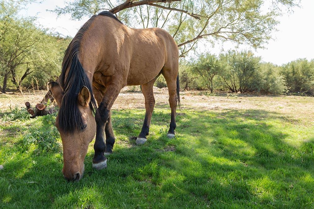Rio Retreat Center Equine Therapy - The Meadows